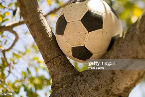 フットボールの木 - 埋まる ストックフォトと画像