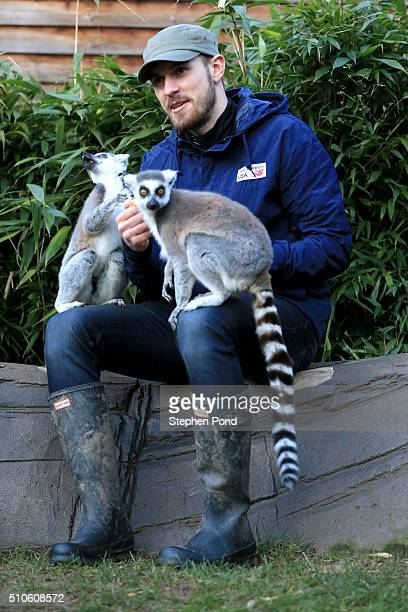Footballer Aaron Ramsey visits Colchester Zoo on February 10 2016 in ColchesterUnited Kingdom Arsenal star Aaron Ramsey revealed his animal instincts...