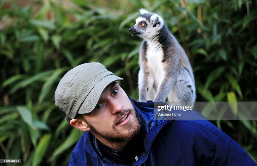 Aaron Ramsey visits Colchester Zoo : News Photo