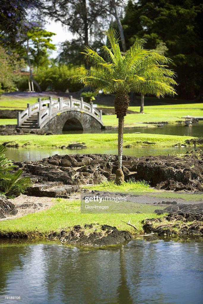 Footbridge across a river, Liliuokalani Park and Gardens, Hilo, Big Island, Hawaii Islands, USA : Foto de stock