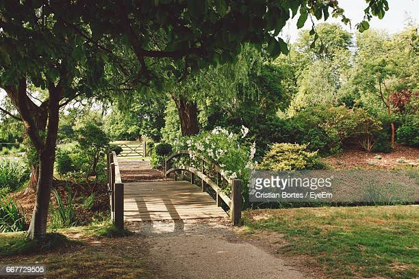 footbridge amidst trees and plants - bortes cristian stock photos and pictures