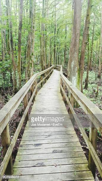 Footbridge Amidst Trees At Forest