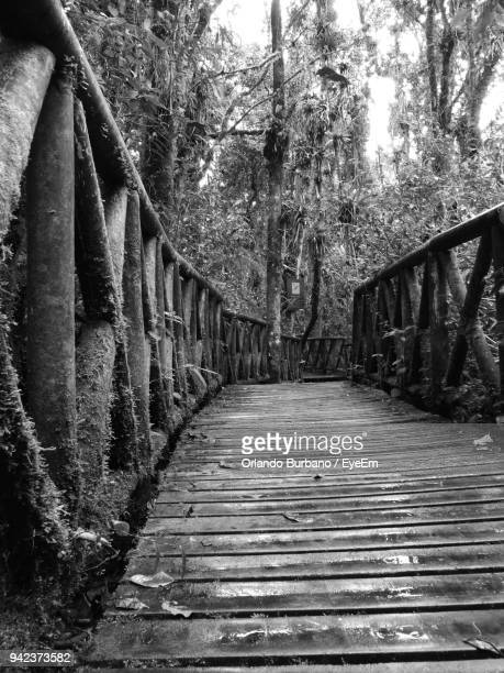 footbridge amidst trees in forest - special:whatlinkshere/file:lucerne_circle,_orlando,_fl.jpg stock pictures, royalty-free photos & images