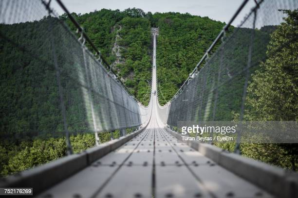 footbridge amidst trees - high up stock photos and pictures