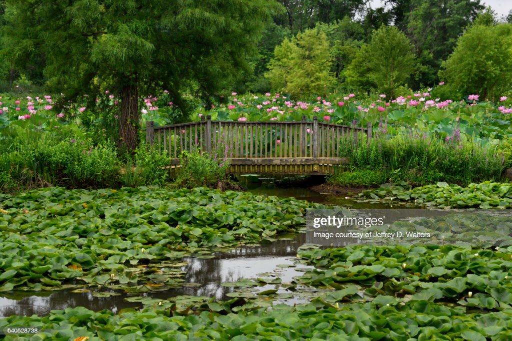 Footbridge At The Aquatic Gardens Stock Photo   Getty Images