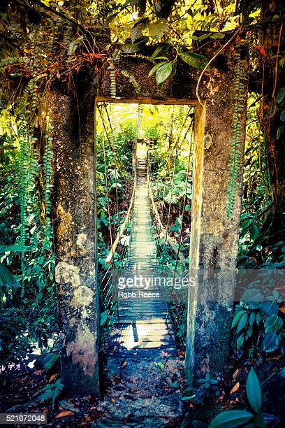 footbridge in jungle of costa rica - robb reece stock pictures, royalty-free photos & images
