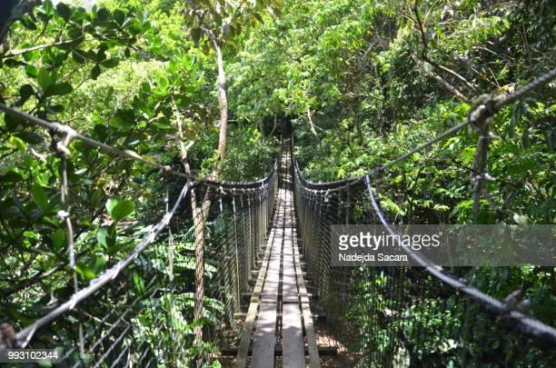 footbridge - guadeloupe photos et images de collection