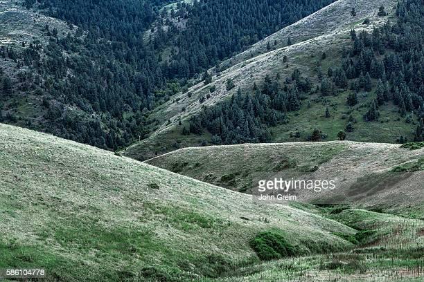 Foothill landscape detail