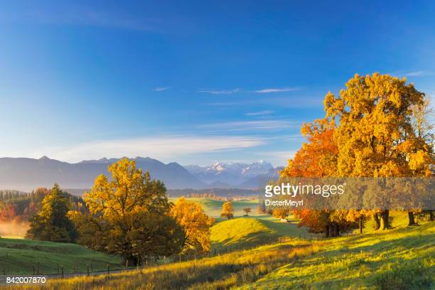 foothpath at indian summer with zugspitze in background - xxl panorama - germany stock pictures, royalty-free photos & images