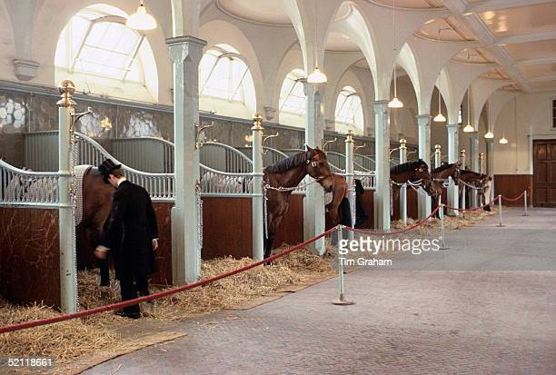 Footman In Top Hat And Tails With Horses In The Royal Mews Attached To Buckingham Palacecirca 1980s
