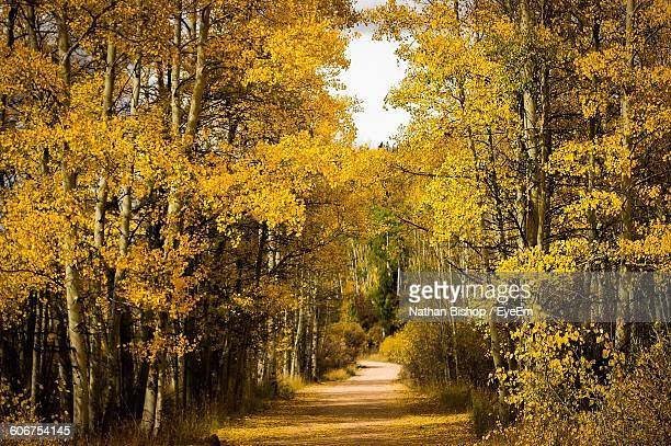 footpath amidst autumn trees in forest - nathan bishop stock pictures, royalty-free photos & images