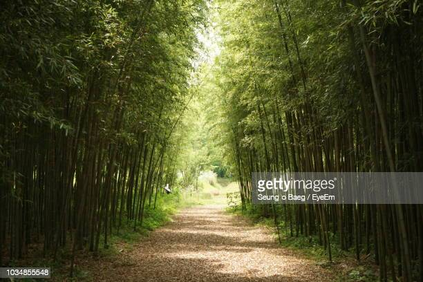 footpath amidst bamboo trees in forest - bamboo forest stock photos and pictures