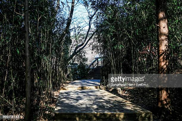footpath amidst bamboo trees - jeonju stock pictures, royalty-free photos & images