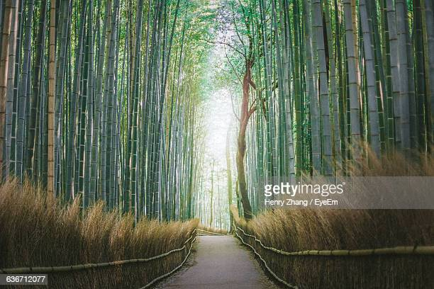 Footpath Amidst Bamboo Trees