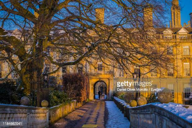 footpath amidst bare trees and buildings during winter - bare tree stock pictures, royalty-free photos & images