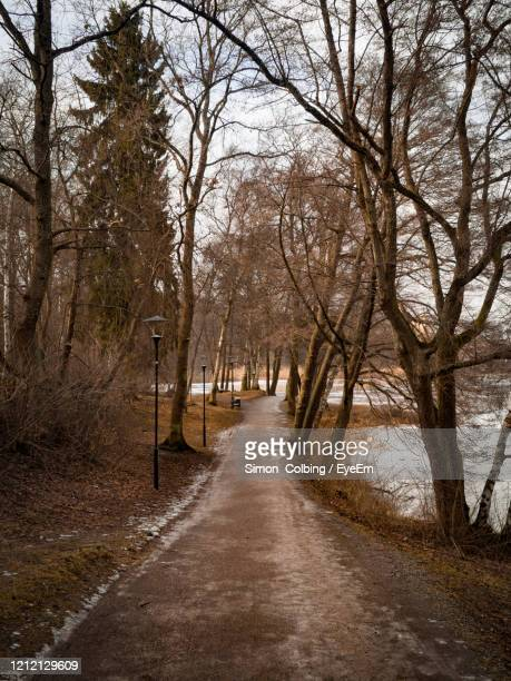 footpath amidst bare trees in forest - colbing stock pictures, royalty-free photos & images