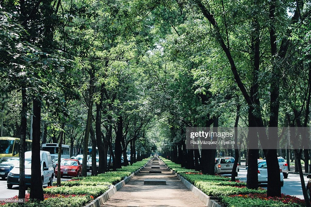 Footpath Amidst City Streets : Stock Photo