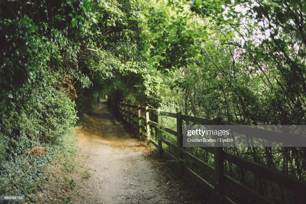 Footpath Amidst Fence And Plants : Stock Photo