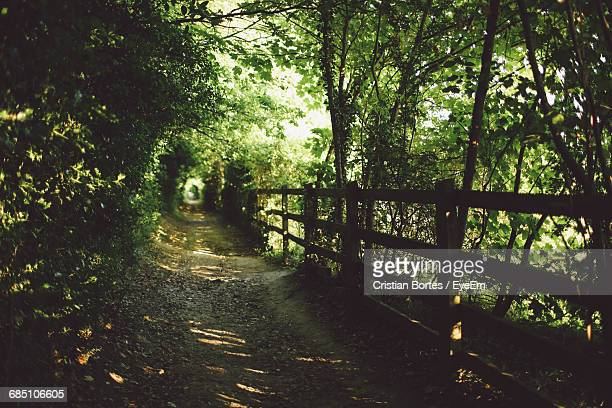footpath amidst fence and plants - bortes fotografías e imágenes de stock