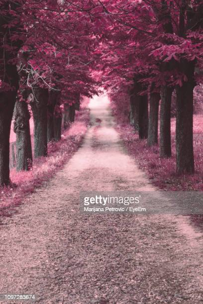 footpath amidst flowering trees in park - marijana stock pictures, royalty-free photos & images