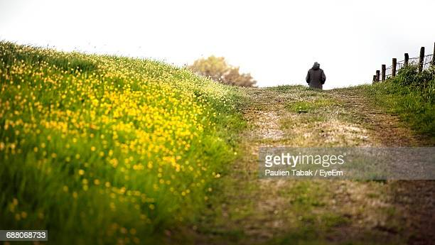 footpath amidst flowers on field against sky - paulien tabak stock pictures, royalty-free photos & images