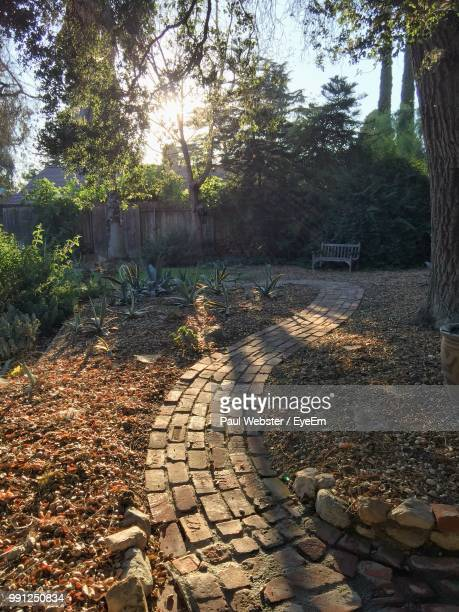 footpath amidst leaves in forest - the webster stock pictures, royalty-free photos & images