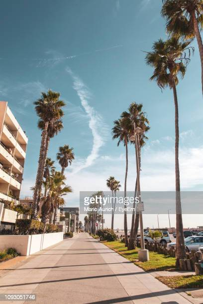 footpath amidst palm trees against sky - venice beach stock pictures, royalty-free photos & images