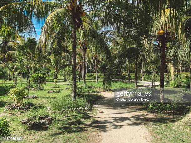 footpath amidst palm trees in park - bortes stock photos and pictures