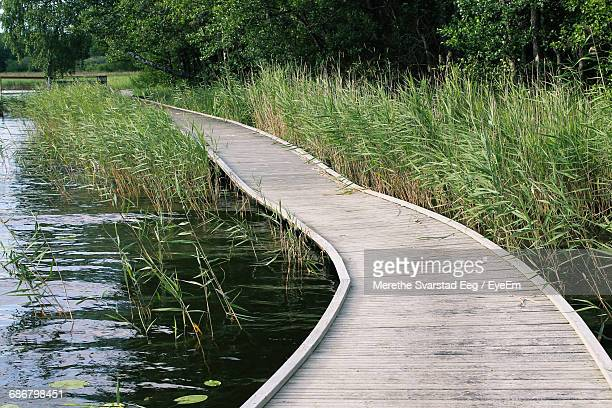 footpath amidst reeds - dalsland stock photos and pictures