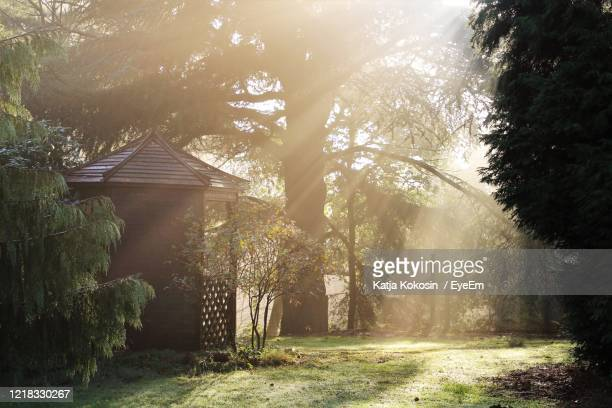footpath amidst trees and buildings in forest - tree stock pictures, royalty-free photos & images