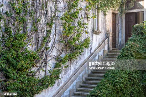 footpath amidst trees and buildings - alfred jansen imagens e fotografias de stock