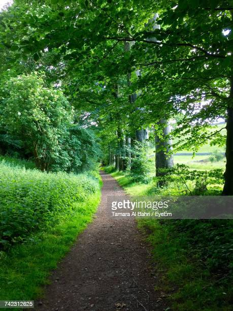 footpath amidst trees and plants - tamara day stock pictures, royalty-free photos & images