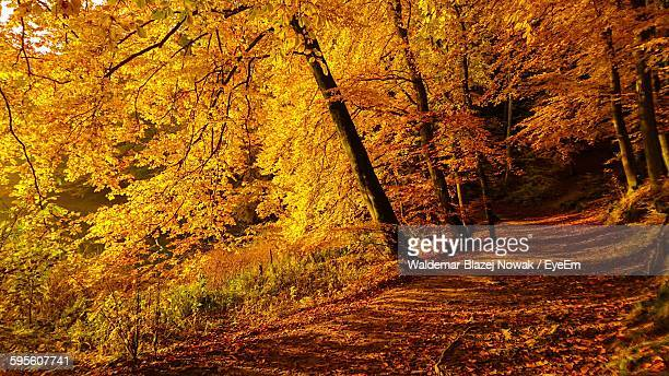 footpath amidst trees during autumn - pomorskie province stock photos and pictures