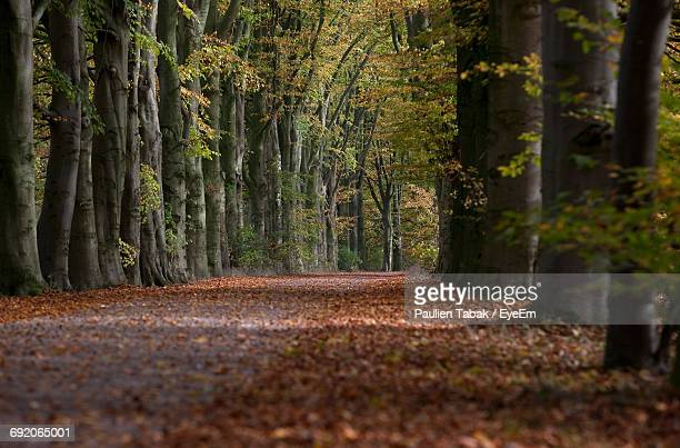 footpath amidst trees during autumn - paulien tabak stock pictures, royalty-free photos & images