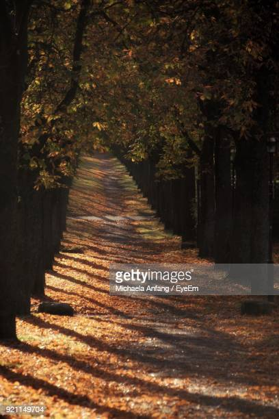 footpath amidst trees during autumn - anfang stock pictures, royalty-free photos & images