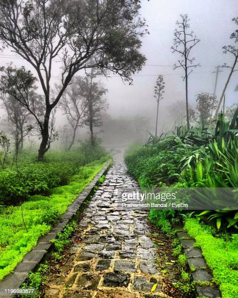 footpath amidst trees in foggy weather - maharashtra stock pictures, royalty-free photos & images