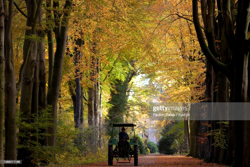 Footpath Amidst Trees In Forest During Autumn : Stockfoto