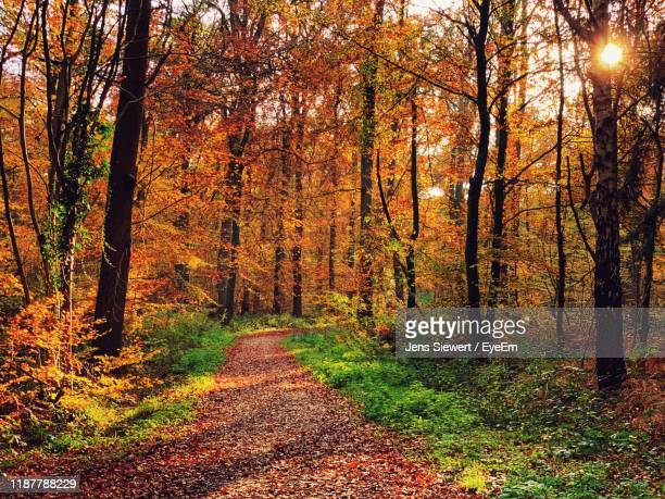 footpath amidst trees in forest during autumn - jens siewert stock-fotos und bilder