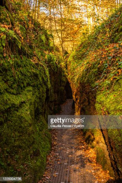 footpath amidst trees in forest during autumn - アイゼナッハ ストックフォトと画像