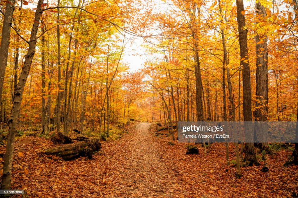 Footpath Amidst Trees In Forest During Autumn : Stock Photo