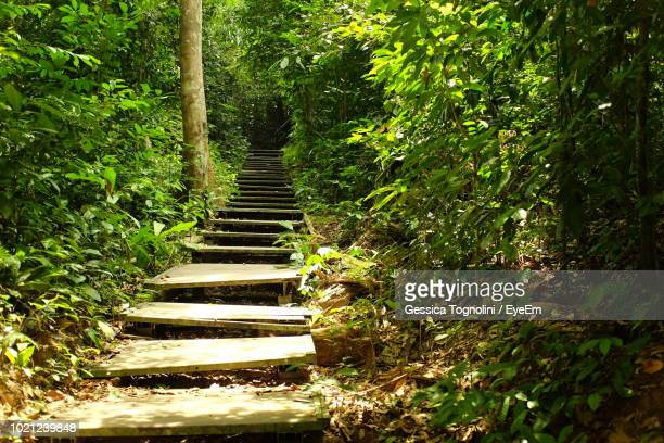 footpath amidst trees in forest - taman negara national park stock photos and pictures