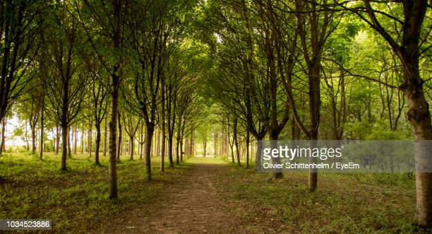 footpath amidst trees in forest - olivier schittenhelm photos et images de collection