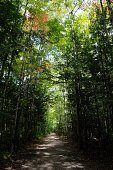 footpath amidst trees forest