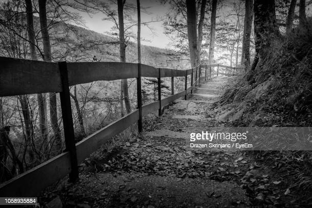 footpath amidst trees in forest - drazen stock pictures, royalty-free photos & images