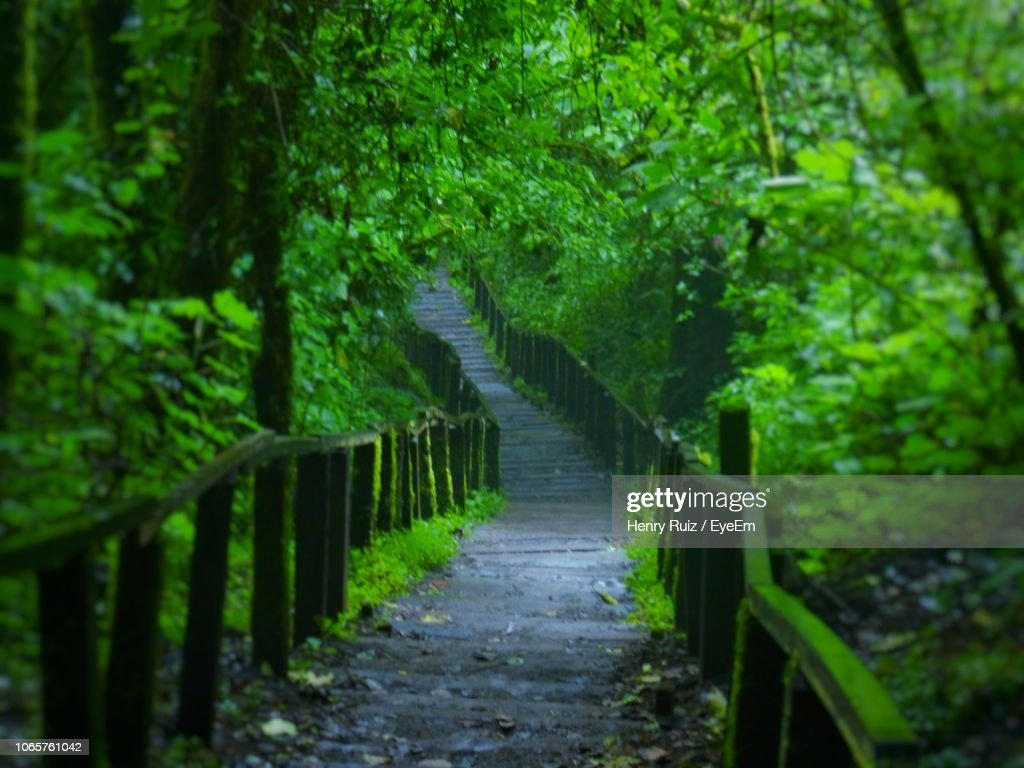 Footpath Amidst Trees In Forest : Stock Photo