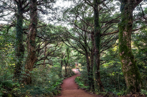 Footpath Amidst Trees In Forest - gettyimageskorea