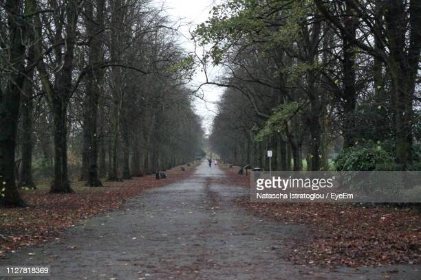 footpath amidst trees in forest - bare tree stock pictures, royalty-free photos & images