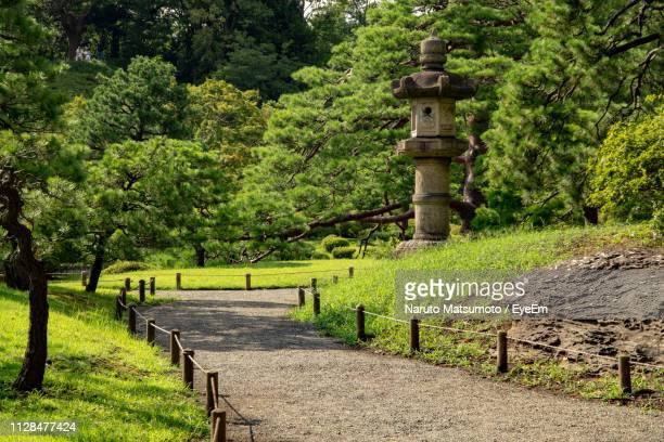 footpath amidst trees in forest - naruto stock photos and pictures