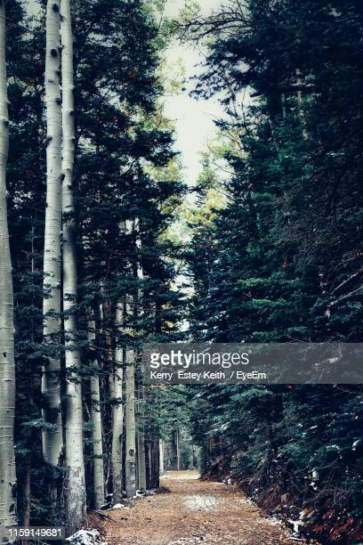 footpath amidst trees in forest - kerry estey keith stock photos and pictures