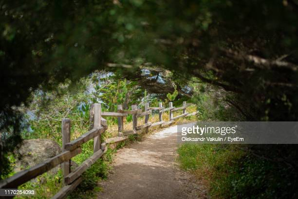footpath amidst trees in forest - oleksandr vakulin stock pictures, royalty-free photos & images